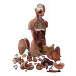 Muscular Torso Dual-Sex Open Back, 28 Parts - code: 6000.53