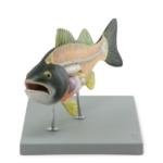 Fish Model - code: 6280.51