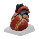 Giant Heart, 4 Parts - code: 6070.05
