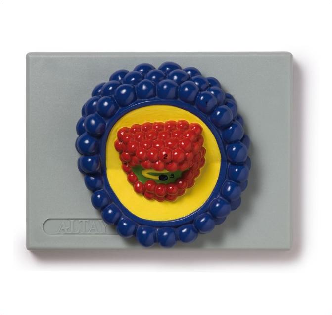 HIV Virus (virus responsible for AIDS) - code: 6233.05 rect