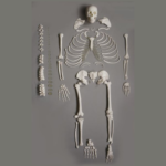 Human Disarticulated Skeleton, Full - code: 6042.04