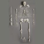 Human Disarticulated Skeleton, Full - code: 6042.04
