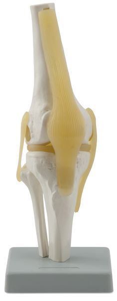 KNEE JOINT 6041.81 a