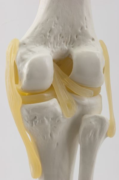 KNEE JOINT 6041.81 b