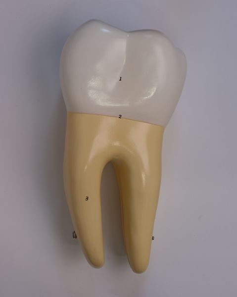 Incisor, Canine and Molar - code: 6041.82 a