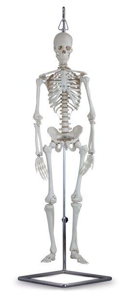 human mini skeleton - 6041.84