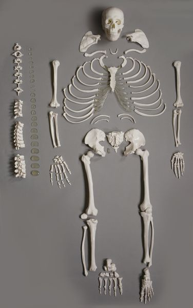 Altay disarticulated human full skeleton