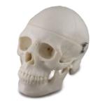 Mini Skull - code: 6041.97