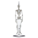 Human Mini Skeleton - code: 6041.84