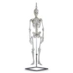 Human Mini Skeleton - code: 6041.84