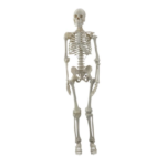 Human Mini Skeleton with Joints - code: 6042.28