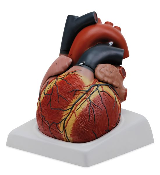 Giant Heart, 4 Parts - code: 6070.05 a