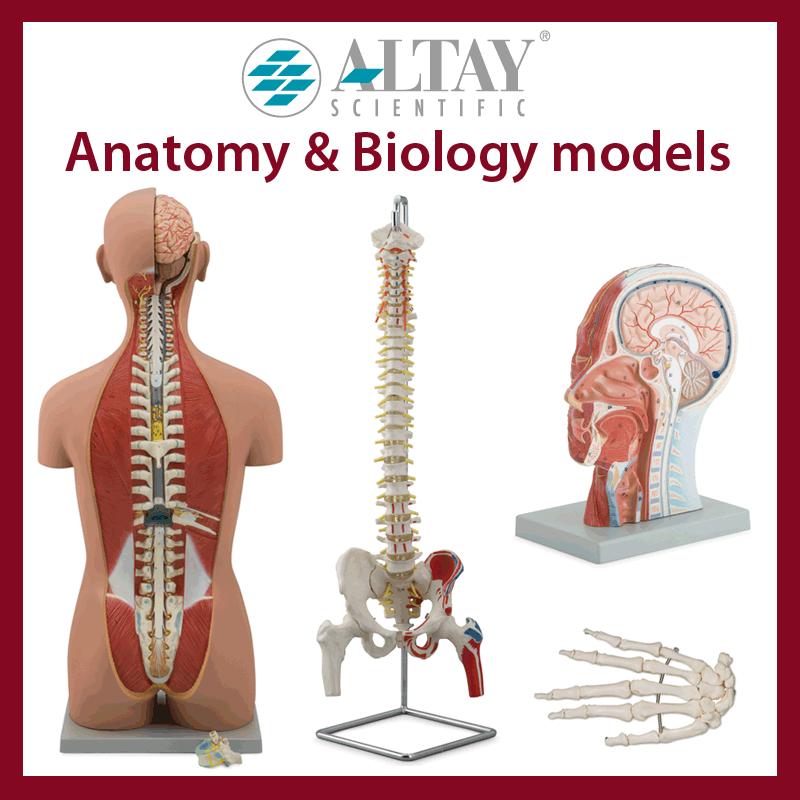 Anatomy & Biology models
